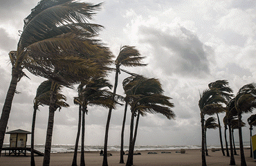 palm trees blowing during a hurricane
